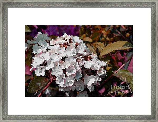 Framed Print featuring the painting White Abstract Flower B2516 by Mas Art Studio