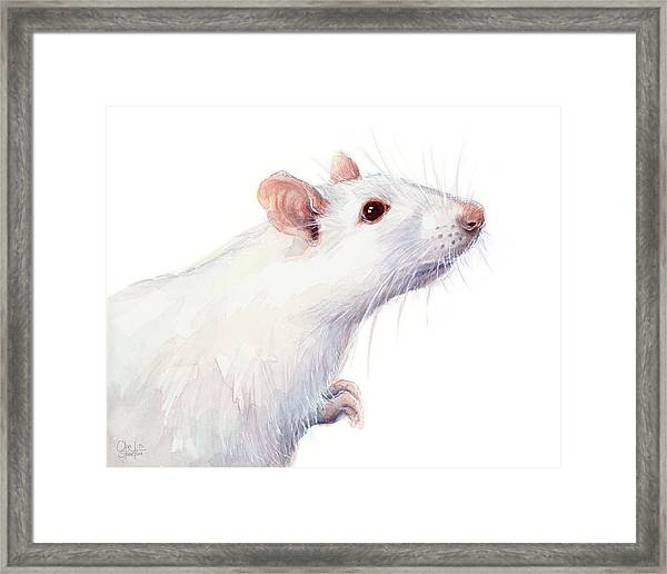 White Albino Rat Watercolor Framed Print