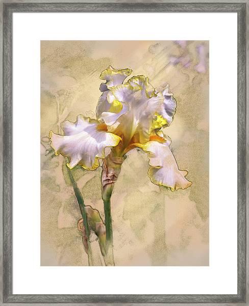 White And Yellow Iris Framed Print