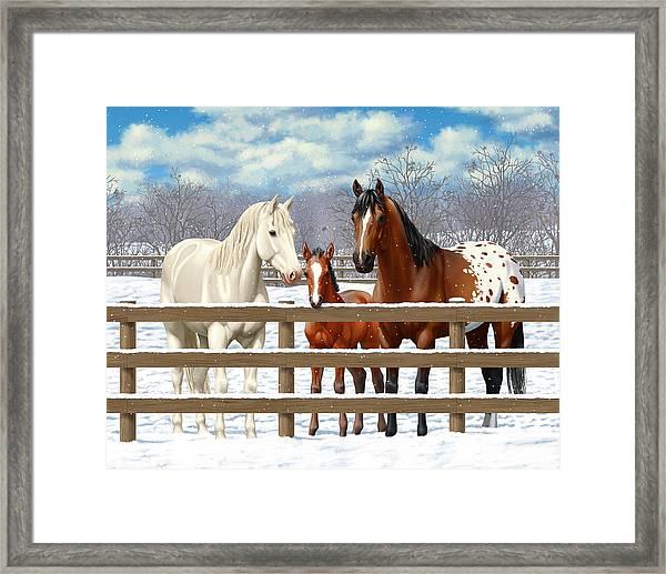 White Bay Appaloosa Horses In Snow Framed Print