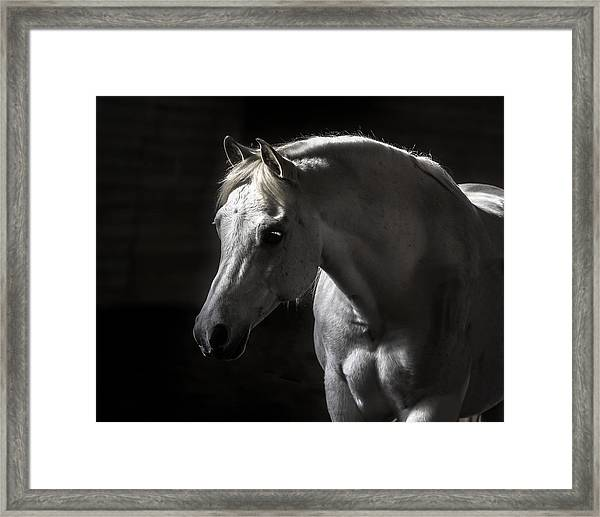 White Beauty Framed Print