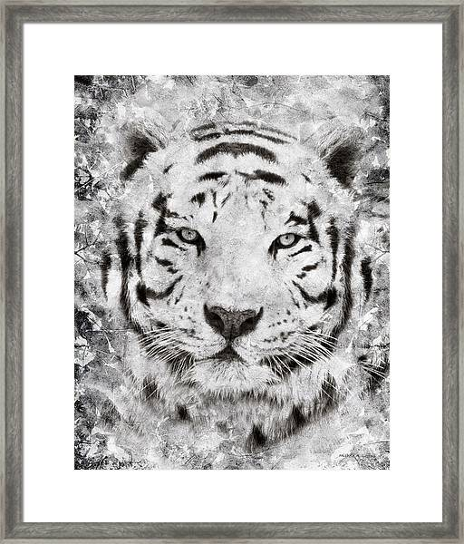 White Bengal Tiger Portrait Framed Print