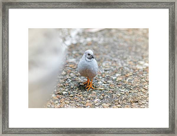 White Bird Sneaking Through Framed Print