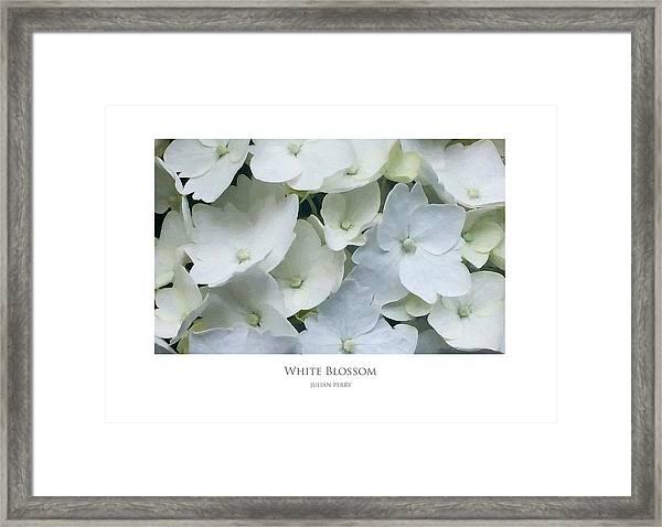 White Blossom Framed Print