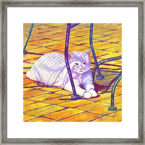 White Cat On Patio Framed Print