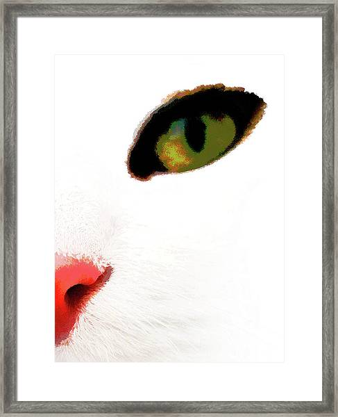 White Cats Face Framed Print