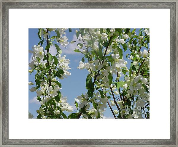 White Crabapple Framed Print