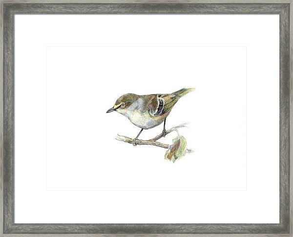 White-eyed Vireo Framed Print