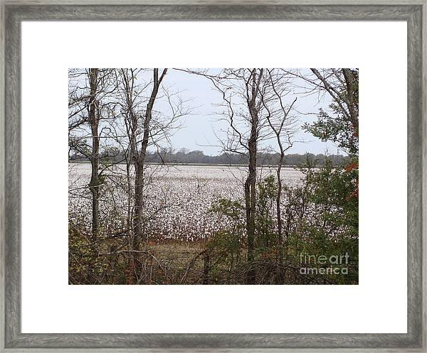 White Fields Framed Print