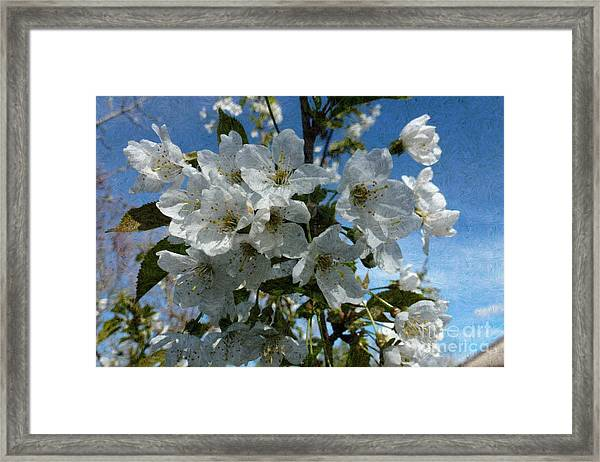 White Flowers - Variation 2 Framed Print
