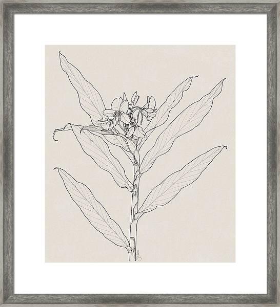 White Ginger Framed Print