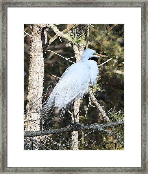 White Gold Framed Print