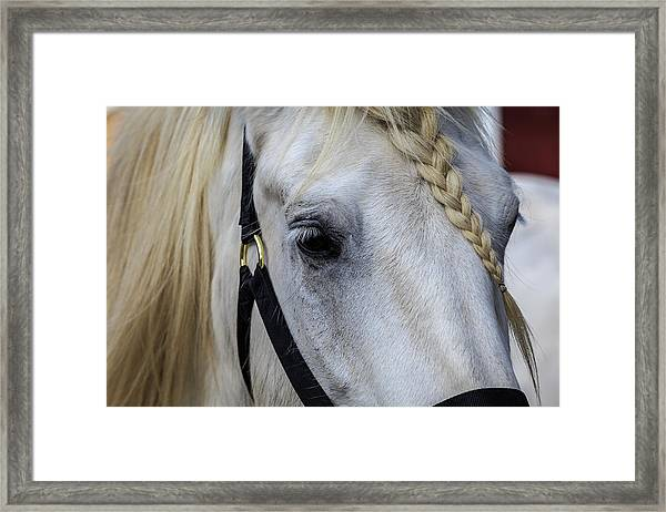 White Work Horse Framed Print