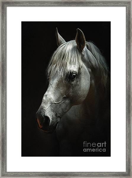 White Horse Portrait Framed Print