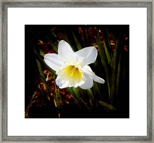 White In Nature Framed Print