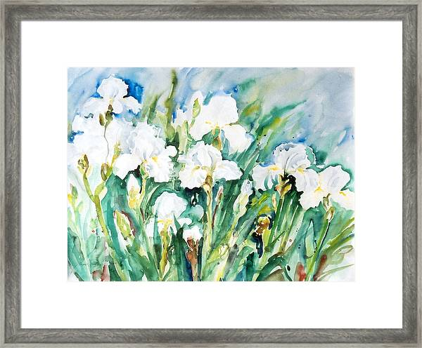 White Irises Framed Print