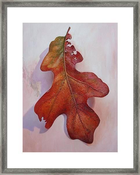 White Oak Leave Framed Print