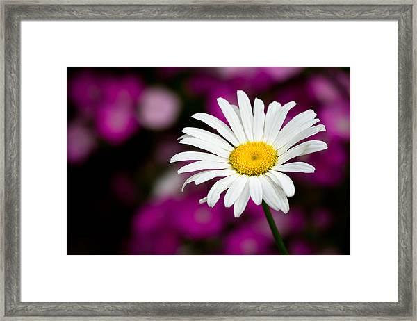White On Pink Framed Print