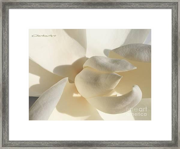 White-on-white Magnoia Framed Print