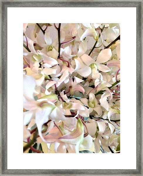 White Orchid Cluster Framed Print