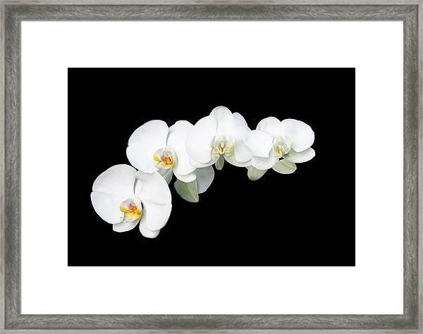 White Orchid Flower Framed Print