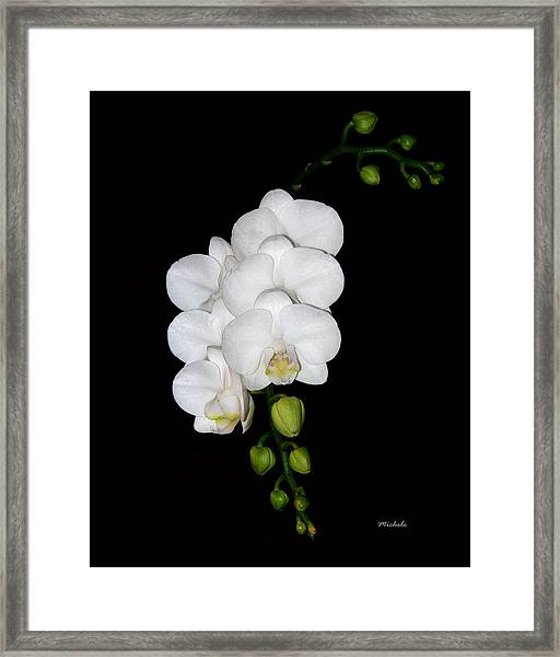 White Orchids On Black Framed Print