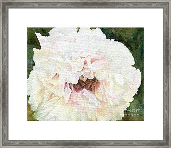 White Peony Framed Print