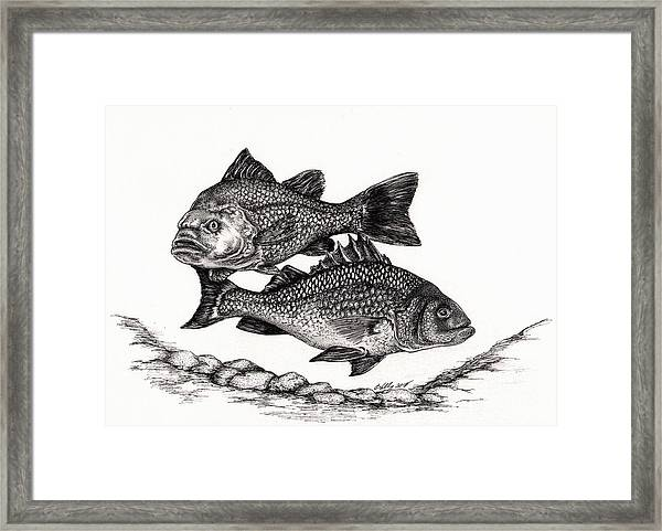 White Perch Framed Print
