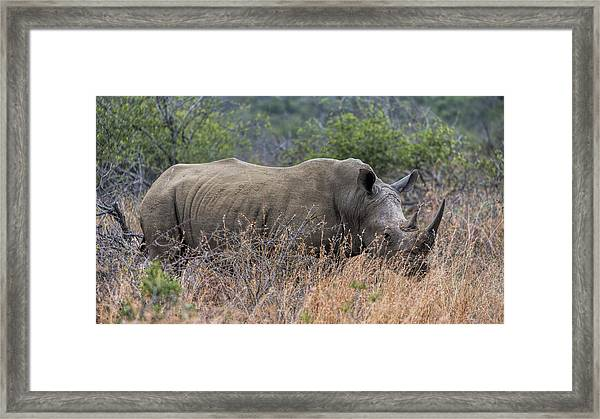 White Rhino Framed Print