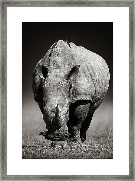 White Rhinoceros  In Due-tone Framed Print