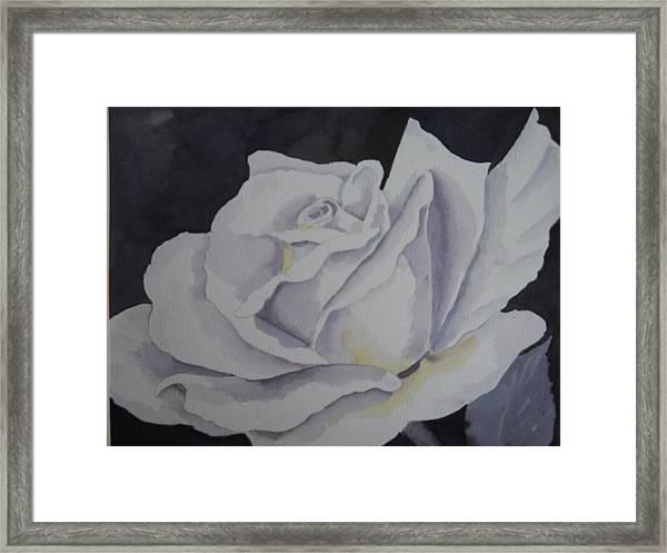 White Rose Framed Print