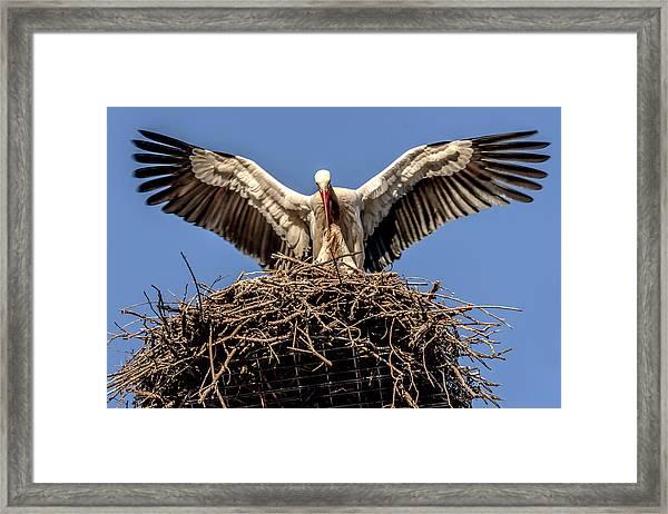 White Storks Of Fagagna 7 Framed Print