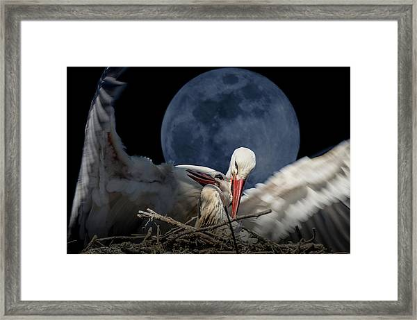 White Storks Of Fagagna With Full Moon Framed Print