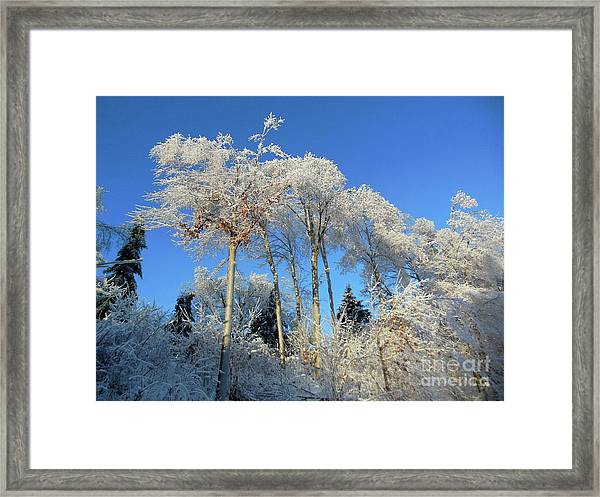 White Trees Clear Skies Framed Print