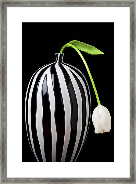 White Tulip In Striped Vase Framed Print