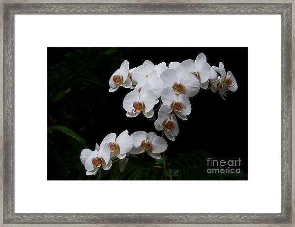 White Velvet Framed Print