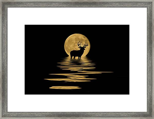 Whitetail Deer In The Moonlight Framed Print