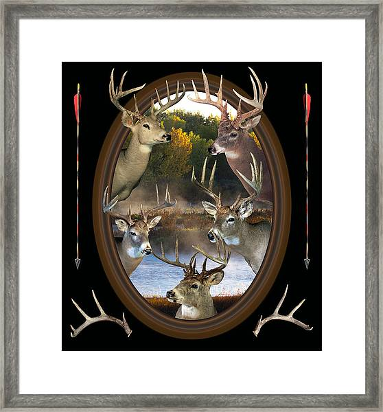 Whitetail Dreams Framed Print