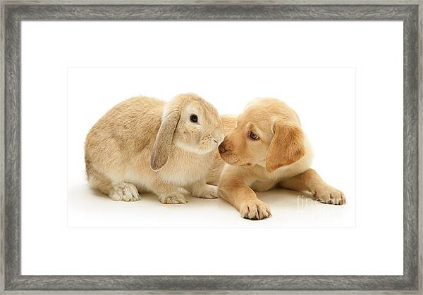Who Ate All The Carrots Framed Print