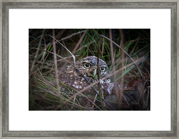 Who Dat Framed Print
