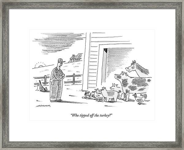 Who Tipped Off The Turkey Framed Print