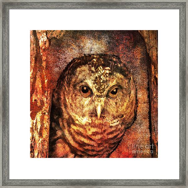 Who Whoo Yoo 2015 Framed Print