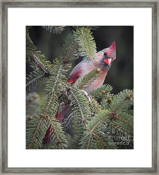 Who You Looking At Framed Print
