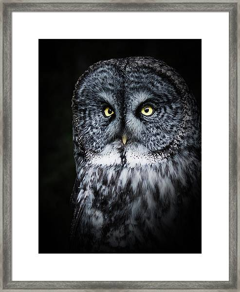 Whooo Are You Looking At? Framed Print