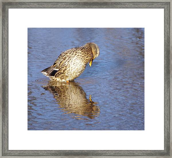 Who's That Framed Print