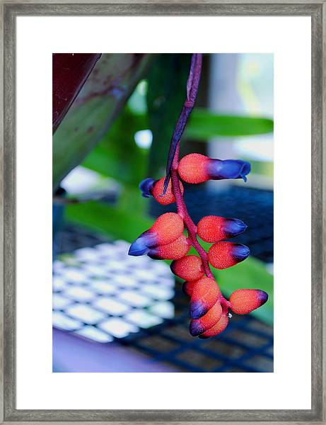 Wild About Bromeliads2 Framed Print