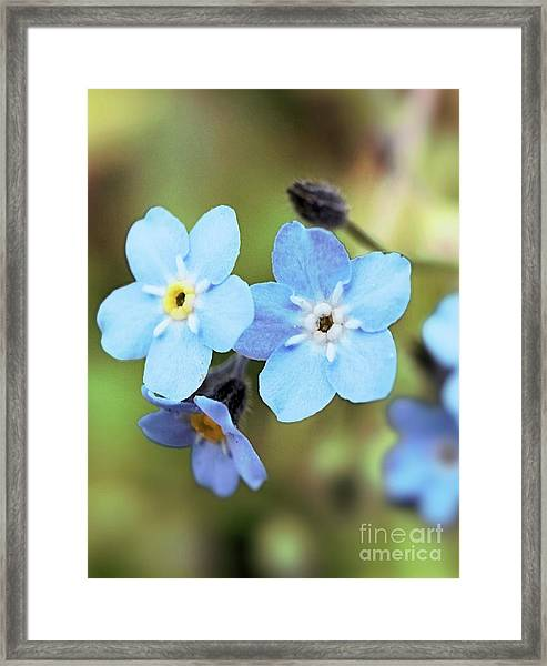 wild and Beautiful 4 Framed Print