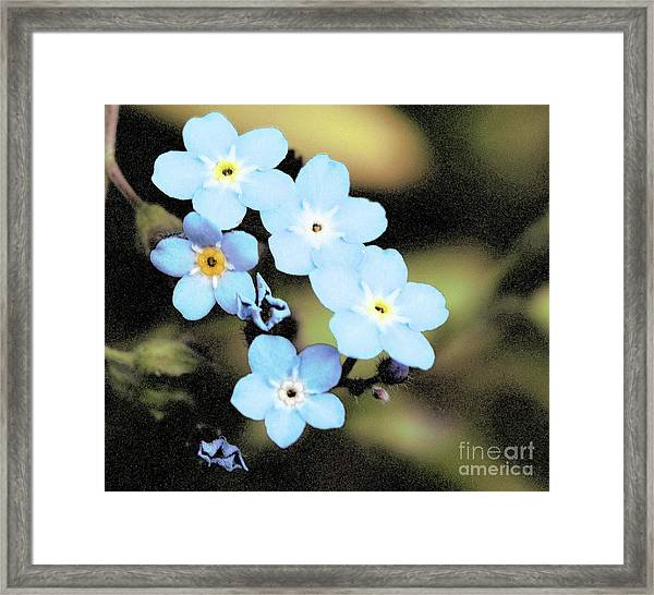 Wild And Beautiful 6 Framed Print