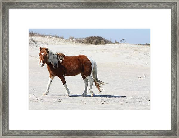 Wild Assateague Ponies 2 Framed Print
