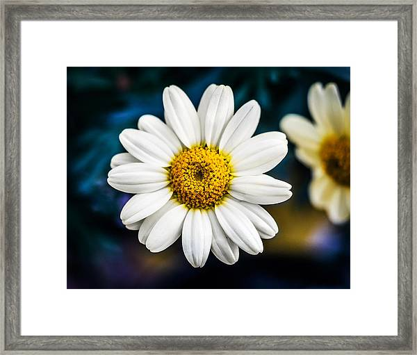 Framed Print featuring the photograph Wild Daisy by Nick Bywater